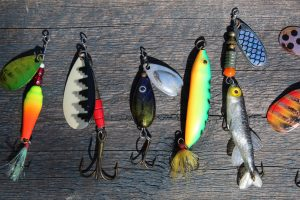 Fishing Lures or Live Bait?