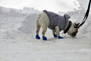 Booties help keep your pups toes warm on the ice